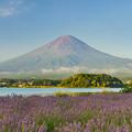 富士とラベンダー