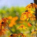 夏色の花~^^