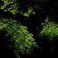 緑紅葉スポットライト