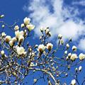 北国の春♪(B面?)