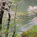 Photos: 散りゆく桜(千鳥ヶ淵)