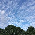 葛が吐き出すような雲