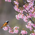Photos: 花見鳥