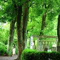 Photos: 深緑の神社