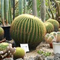 2004年植物園05_1