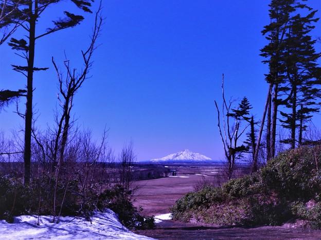 丘の上から利尻富士を望む
