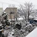 Photos: 天気は雪_1