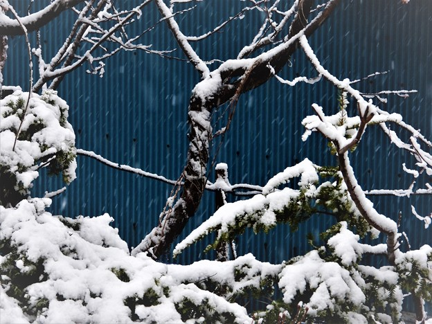 Photos: 天気は雪_2