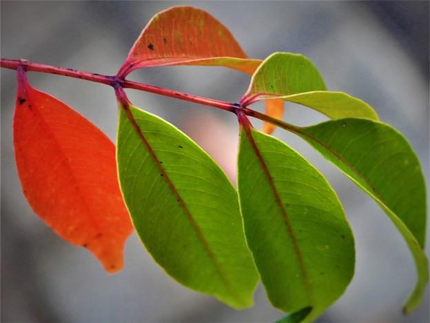 色分けされた葉っぱ