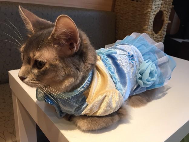 猫カフェもふにゃん2017年秋・こまりん1