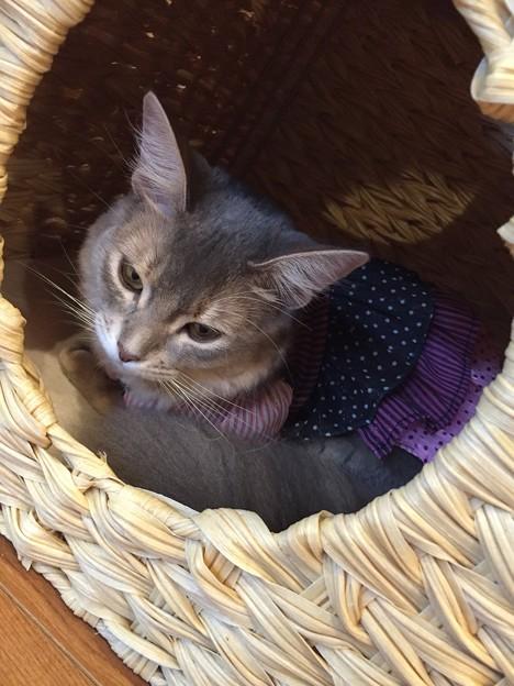 猫カフェもふにゃん2017年秋・こまりん5