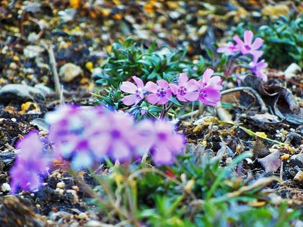 道端のお花