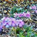 Photos: 道端のお花