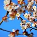 Photos: 桃色お花