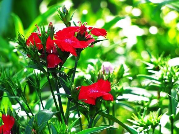 面白いお花