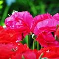 花壇のお花