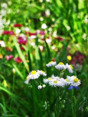 ジオン的なお花