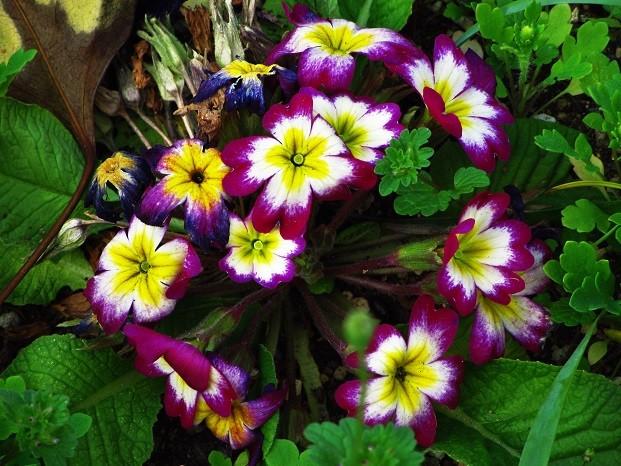 Photos: 紫なお花