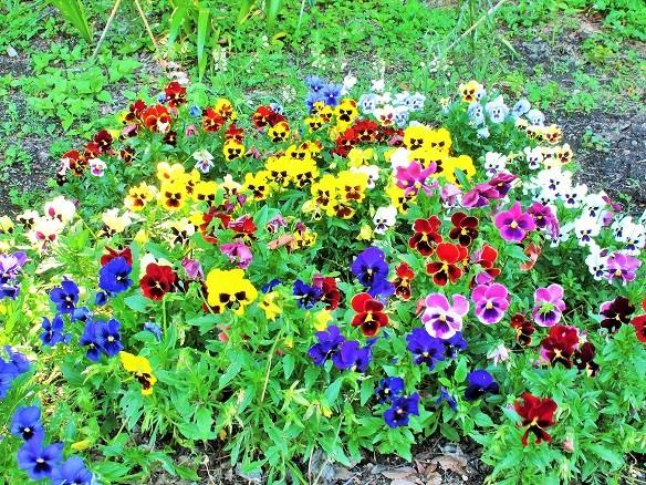 蔵出し:お花達