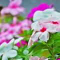 優しいお花
