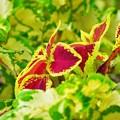 花っぽい葉