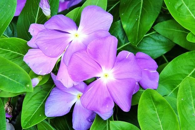 紫のお花~