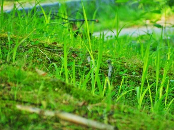 雑草だらけの地面