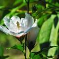 Photos: お花~♪