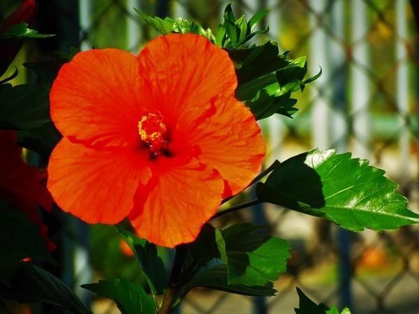 立派なお花