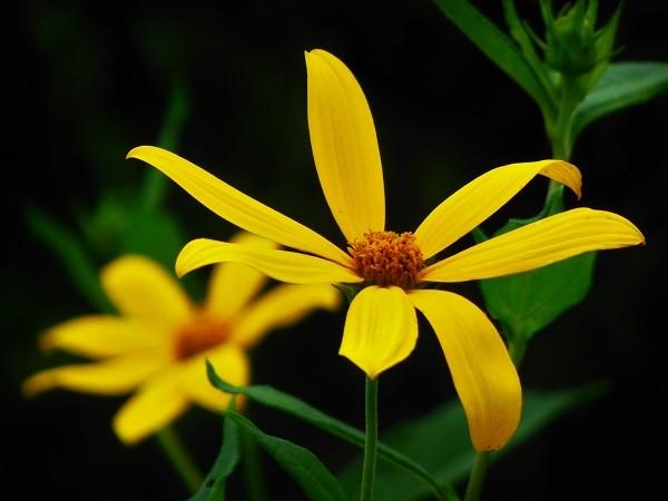 黄色いおはな~♪