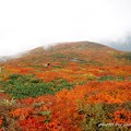 栗駒山 紅葉