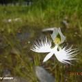 Photos: sagisou1