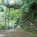 Photos: tokoniji2