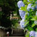 Photos: 参道沿い