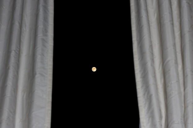 Photos: あら、お月様