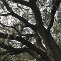 Live Oak I 2-18-21