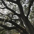 Photos: Live Oak I 2-18-21