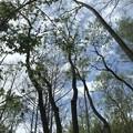 Photos: Coastal Plain Willow 2-18-21