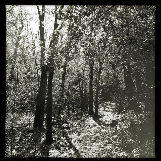 Trail 2-18-21