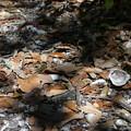 Shell Mound 3-7-21