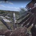 Southwest Florida Eagle Cam 4-4-21 121901 PM