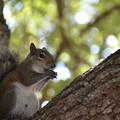 Photos: Eastern Grey Squirrel 3-26-21