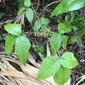 Leaves of Three 3-11-21