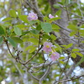 Trumpet Tree 3-11-21