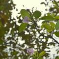 Photos: Trumpet Tree II 3-11-21