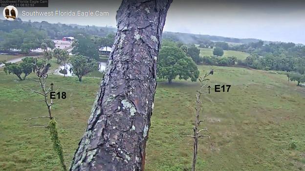 No4  E18 無事にOld Cam2 Treeに着陸 4-21-2021 0852AM