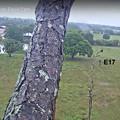Photos: No4  E18 無事にOld Cam2 Treeに着陸 4-21-2021 0852AM