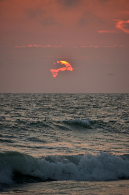 The Waves and a Bird 5-5-21