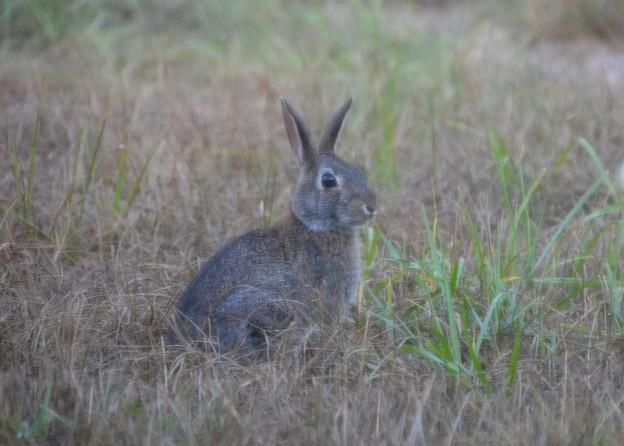 Peter Rabbit 5-26-21