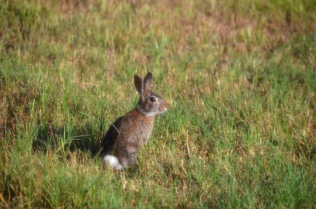 Peter Rabbit 5-27-21